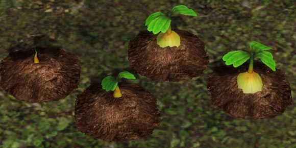 angepflanzte Verbotene Frucht in unterschiedlichen Wachstumsstadien