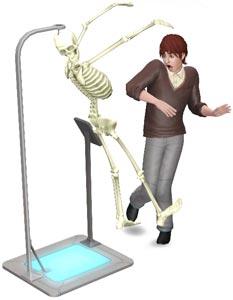 Anatomisches Skelett: Skelettstruktur prüfen
