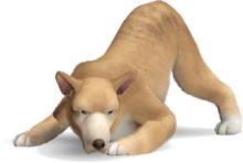 Fähigkeit sammeln - jagender Hunde als Unterstützung