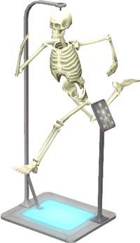 Sims 3 Sport-Studium - Anatomisches Skelett