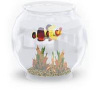Tragischer Clownfisch im Fischglas