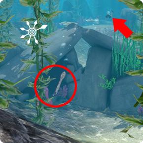 Tauchbezirk Felsenriff – 2. Unterwasser-Höhle auf der Rückseite