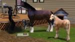 Pferd bedrängt Mephisto, den Freund fürs Leben zu verschonen