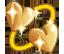 Sims 4 Bestreben Seelenverwandte