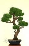 Sims 4 Gartenarbeit Traditionelle Bonsai-Form