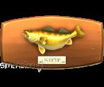 Sims 4 Fisch an der Wand Glasaugenbarsch