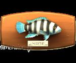 Sims 4 Fisch an der Wand Buntbarsch