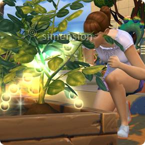 Pflanzenqualität aufwerten mit der Die Sims 4 Fähigkeit Gartenarbeit