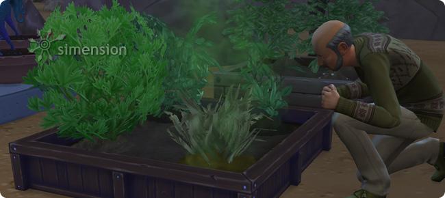 Wiederbeblebung verwelkter Pflanzen mit dem Supergrünen Daumen