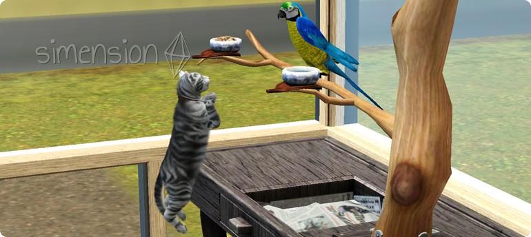 Katze greift Vogel an