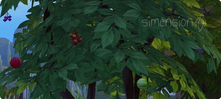vorbereiteter perfekter Baum wurde um Simfrucht veredelt